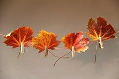 Jesień motyw Zdjęcie Royalty Free