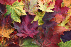 Jesień mozaika. Obrazy Stock