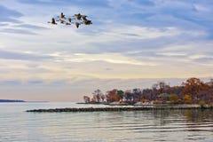 Jesień na Chesapeake zatoce Fotografia Royalty Free