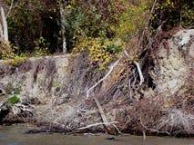 Jesień na Danube islands& x28; 7& x29; zdjęcie stock