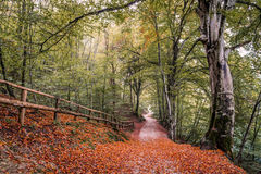 Jesień na Jeziornym Ledro Fotografia Royalty Free