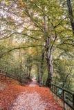 Jesień na Jeziornym Ledro zdjęcie stock