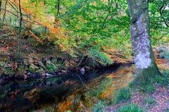 Jesień na Rzecznym Fowey Obraz Stock
