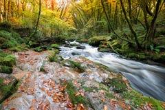 Jesień na Rzecznym Fowey Fotografia Stock