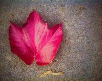 Jesień na ulicie Obraz Stock