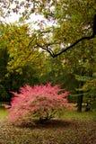 jesień nastrój Obraz Royalty Free