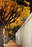 jesień nastrój Fotografia Stock