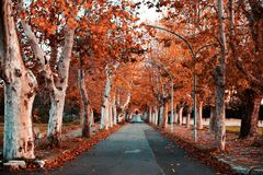 Jesień nastrój w Apulia fotografia royalty free
