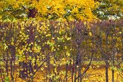 Jesień naszywani krzaki w parku Fotografia Stock