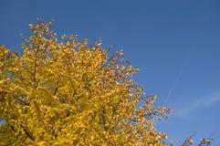 jesień niebo Obrazy Royalty Free