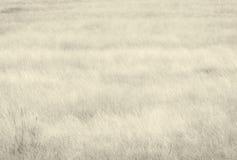Jesień obszar trawiasty Obraz Stock