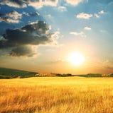 jesień obszar trawiasty Obraz Royalty Free