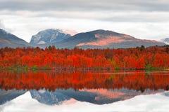 Jesień Odbicia Fotografia Stock