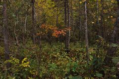 Jesień oddech fotografia stock