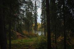 Jesień oddech zdjęcia royalty free