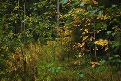 Jesień oddech zdjęcie royalty free