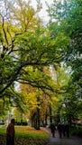 Jesień ogródu obrazki od Niemcy Obrazy Stock