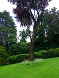 jesień ogrodowy scenerii drzewo Zdjęcia Royalty Free