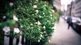jesień ogrodowy scenerii drzewo Obraz Stock