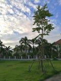 jesień ogrodowy scenerii drzewo Zdjęcie Royalty Free