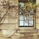 Jesień okno Zdjęcie Royalty Free