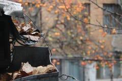 jesień osamotniona zdjęcia stock