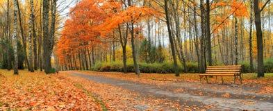jesień park Zdjęcia Royalty Free