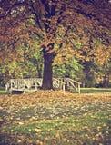 jesień park Fotografia Royalty Free