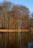 jesień park Fotografia Stock