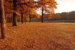 Jesień park Zdjęcie Stock