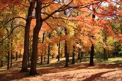 jesień park Zdjęcie Royalty Free