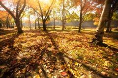 Jesień park w Japan Fotografia Royalty Free