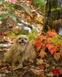Jesień pies Obrazy Royalty Free