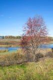 jesień pogoda krajobrazowa rzeczna pogodna Zdjęcie Royalty Free