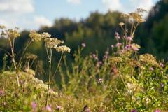 Jesień pogodny krajobraz Zdjęcie Royalty Free