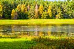 Jesień pogodny krajobraz Soroti rzeka i jesieni lasowi drzewa w Pushkinskiye Krwawym, Rosja Fotografia Royalty Free