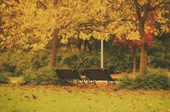 Jesień pogodny park Zdjęcie Royalty Free