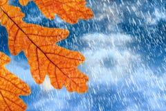 jesie? poj?cia odosobniony biel Sezonowy jesieni t?o obrazy royalty free