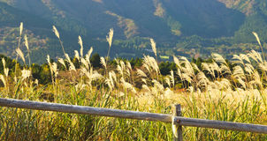 jesień pola trawy Hakone Japan pamapas Obraz Royalty Free