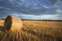 jesień pole Obraz Royalty Free