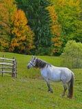 Jesień przy Karpackimi górami, Ukraina Obraz Royalty Free