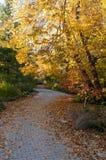 Jesień przy ogródem botanicznym w Madison Zdjęcie Stock