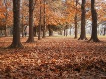 Jesień przy parkiem narodowym Obraz Stock