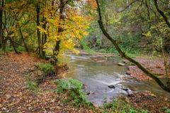 Jesień przy Rzecznym Blyth w Plessey drewnach fotografia royalty free
