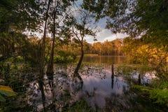 Jesień przy srebrem Skacze stanu park w Ocala, FL Fotografia Stock