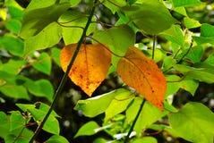 Jesień przychodzi Fotografia Stock