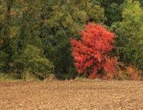 Jesień przychodzi halni lasy Fotografia Stock