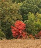 Jesień przychodzi halni lasy Obraz Royalty Free