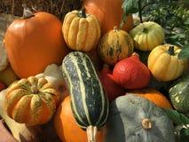 Jesień przysmaki Obrazy Stock