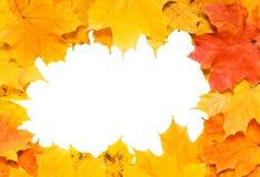 jesień rama Obraz Stock
